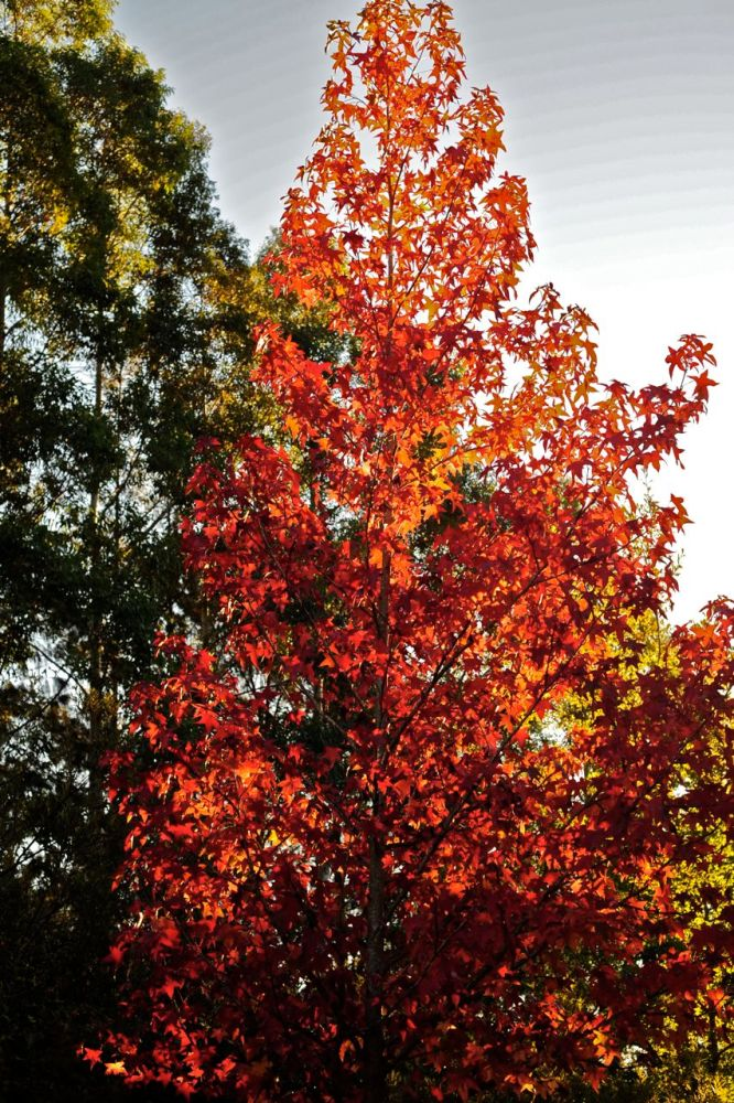 Cape autumn light (3/6)