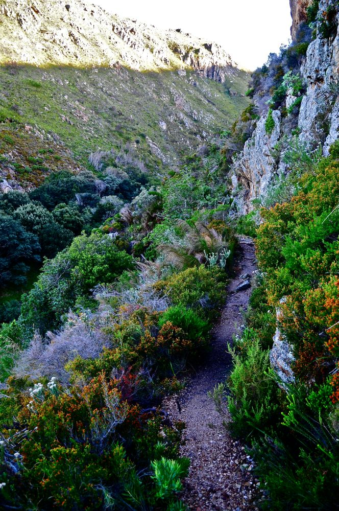 After the Storm - into the Wild - early Sunday morning in the Harold Porter Reserve (3/6)