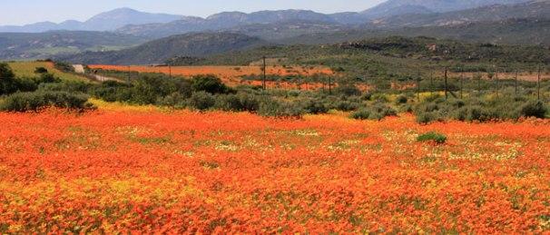 namaqua-national-park_main.jpg