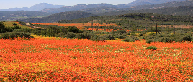namaqua-national-park_main.jpg