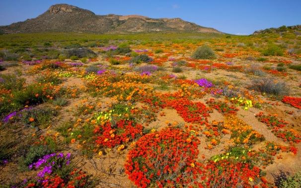 namaqualand wild flower tours (2).jpg